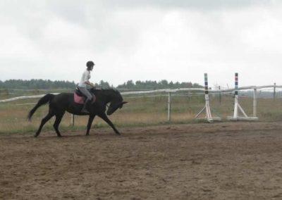 oboz-konie-2015-2-0053