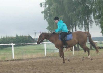 oboz-konie-2015-2-0058