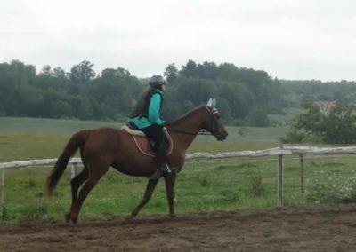 oboz-konie-2015-2-0059