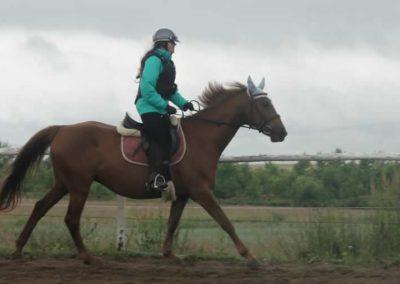 oboz-konie-2015-2-0060
