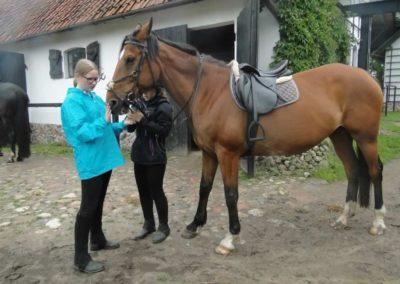oboz-konie-2015-2-0100