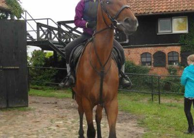 oboz-konie-2015-2-0103