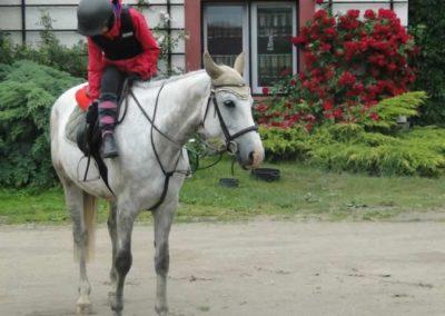 oboz-konie-2015-2-0112