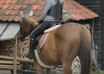 oboz-konie-2015-2-0114