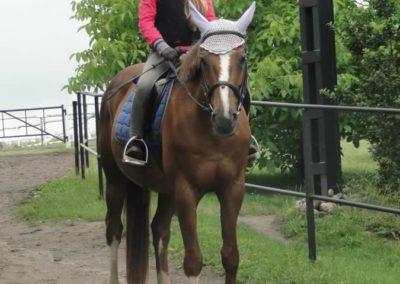 oboz-konie-2015-2-0124