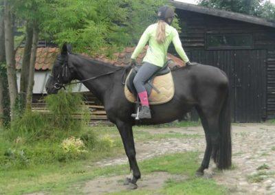 oboz-konie-2015-2-0129