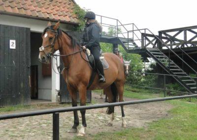 oboz-konie-2015-2-0131