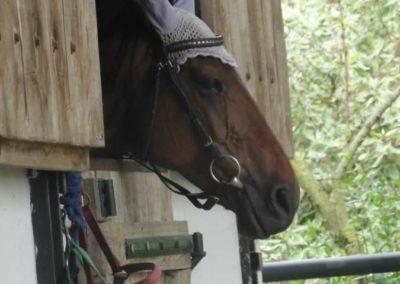 oboz-konie-2015-2-0187