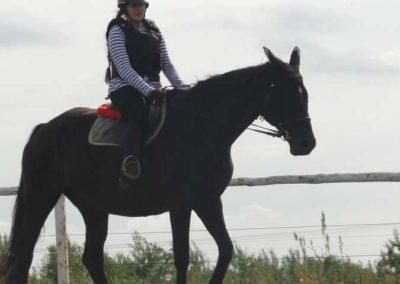 oboz-konie-2015-2-0211