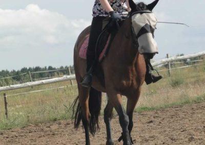 oboz-konie-2015-2-0220