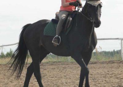 oboz-konie-2015-2-0222