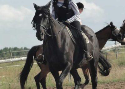 oboz-konie-2015-2-0229