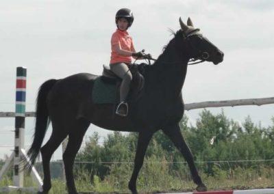 oboz-konie-2015-2-0232