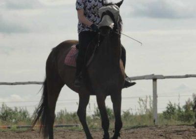 oboz-konie-2015-2-0234