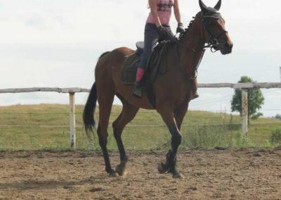 oboz-konie-2015-2-0236