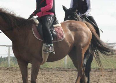 oboz-konie-2015-2-0237