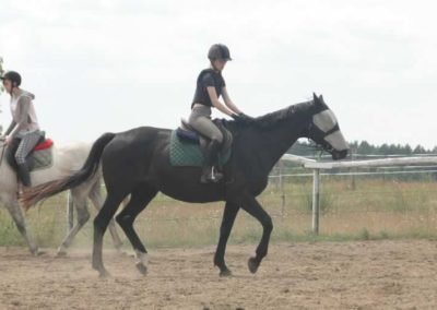 oboz-konie-2015-3-0007