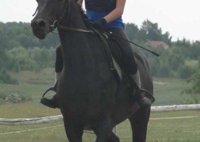 oboz-konie-2015-3-0011