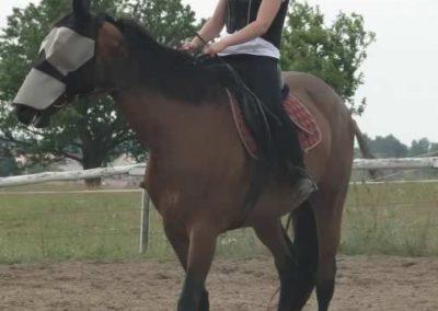 oboz-konie-2015-3-0017