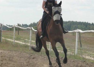 oboz-konie-2015-3-0038