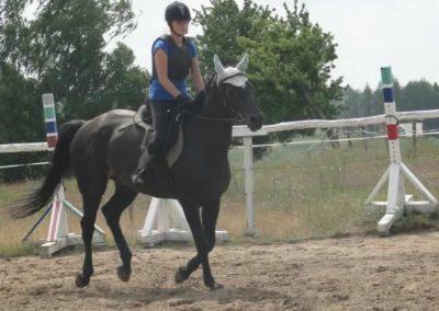 oboz-konie-2015-3-0039