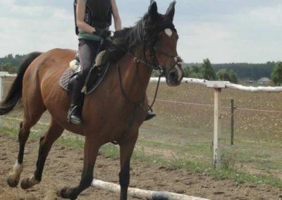 oboz-konie-2015-3-0040