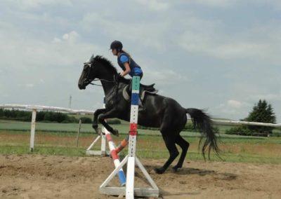 oboz-konie-2015-3-0084