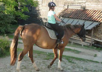 oboz-konie-2015-3-0086