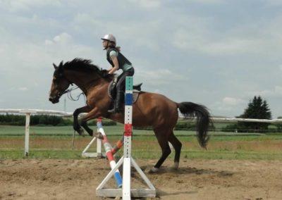 oboz-konie-2015-3-0087