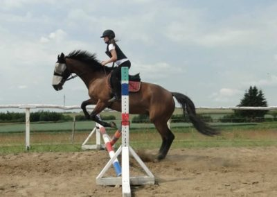oboz-konie-2015-3-0089