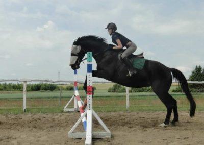 oboz-konie-2015-3-0096