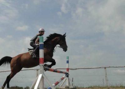 oboz-konie-2015-3-0128