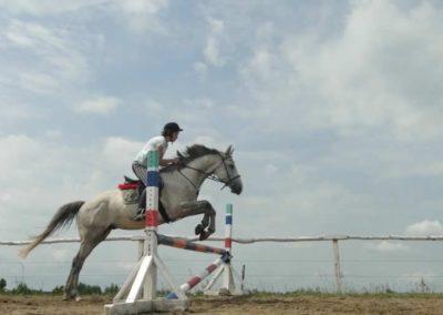 oboz-konie-2015-3-0130