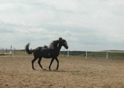 oboz-konie-2015-3-0143