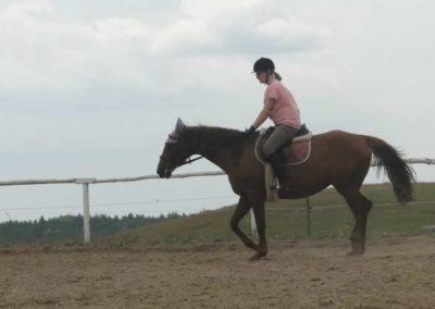 oboz-konie-2015-3-0151