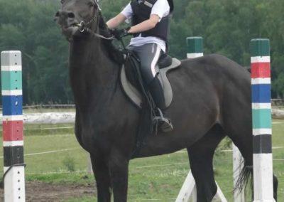 oboz-konie-2015-3-0154