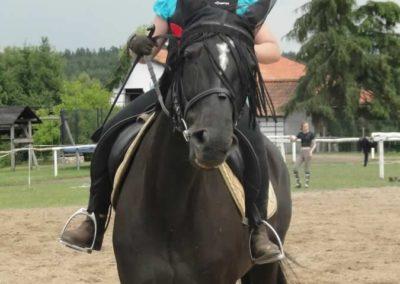 oboz-konie-2015-3-0171