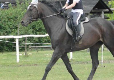 oboz-konie-2015-3-0173