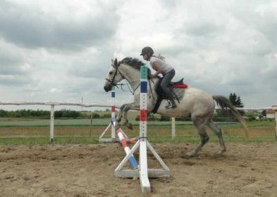 oboz-konie-2015-3-0186