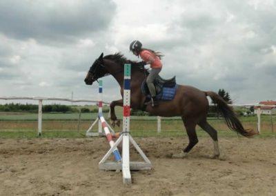 oboz-konie-2015-3-0187
