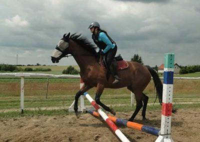 oboz-konie-2015-3-0193