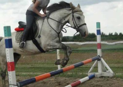 oboz-konie-2015-3-0196