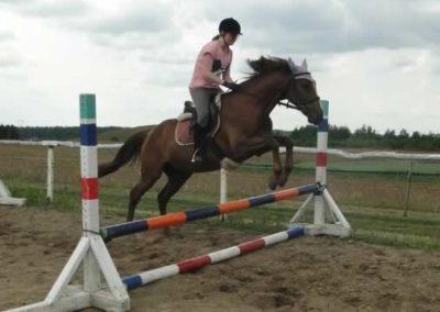 oboz-konie-2015-3-0198