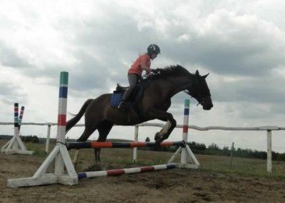 oboz-konie-2015-3-0202