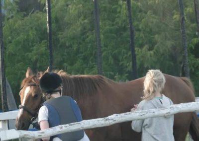 oboz-konie-2015-3-0214