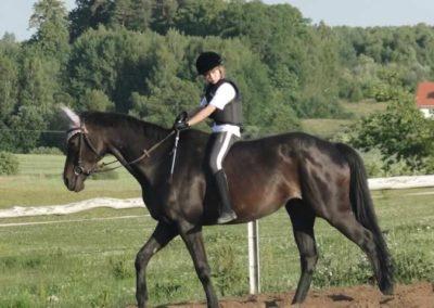 oboz-konie-2015-3-0224