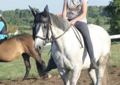 oboz-konie-2015-3-0225