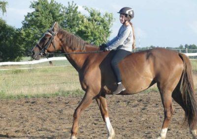 oboz-konie-2015-3-0229