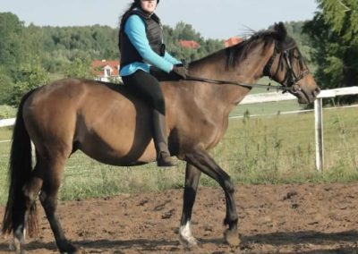 oboz-konie-2015-3-0237