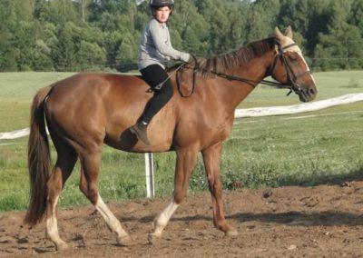 oboz-konie-2015-3-0238